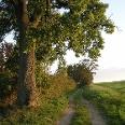 Menschenleere Feldwege sind in Mecklenburg nicht selten.