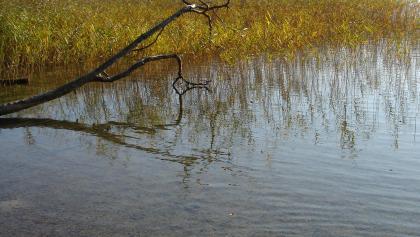 Das Wasser des 69 m tiefen Stechlinsees ist von ungewöhnlicher Klarheit.