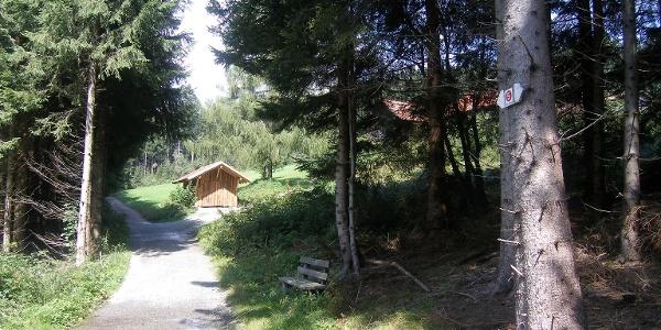 Eine Lichtung bei Silberreuten unterbricht den großen Waldabschnitt bei Rettenberg.