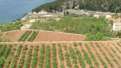 Gemüsegärten oberhalb von Banyalbufar.