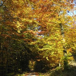 Im Herbst zeigt sich der Rothaarsteig in den schillderndsten Farben.