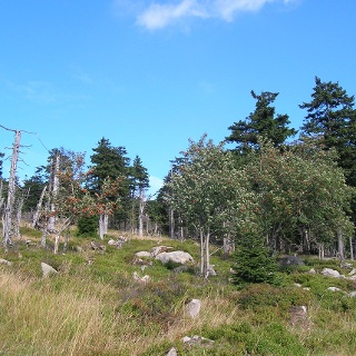 Wenn die Bäume und Sträucher in Blüte stehen, ist die Wanderung besonders reizvoll.
