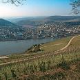 Blick über die Weinberge auf den Rhein.