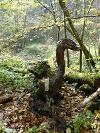 Kunst...eine Laune der Natur.. ein Schwan aus Holz...  - @ Autor: Heinz Obinger  - © Quelle: www.wegpunkt.de