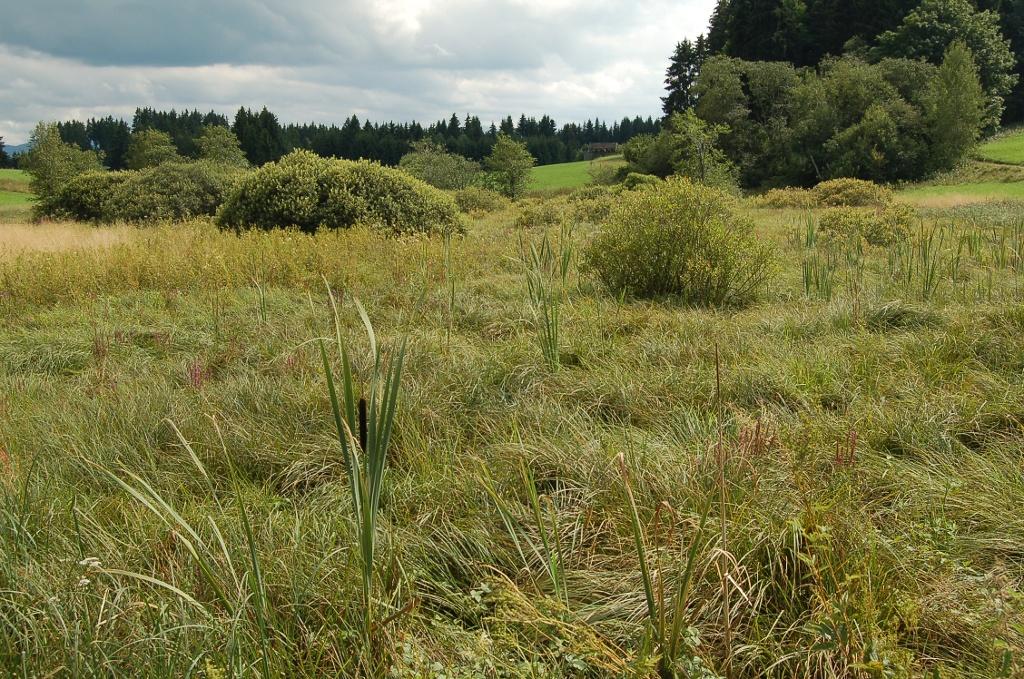 Reste eines Hochmoors in den Gehagetslaichwiesen. ()
