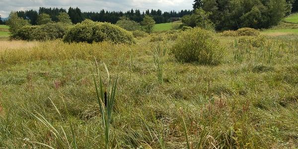Reste eines Hochmoors in den Gehagetslaichwiesen.