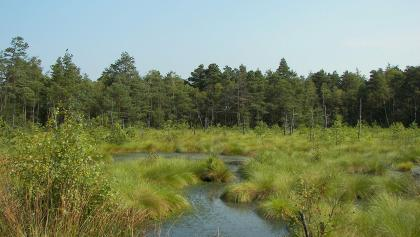 Moorlandschaft in der Lüneburger Heide