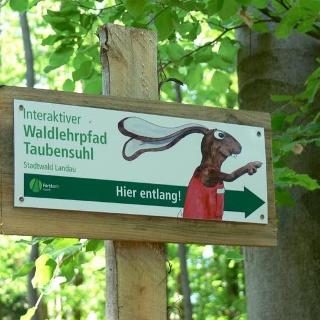 Der Hase weist uns den Weg durch den Waldlehrpfad auf dem Taubensuhl.