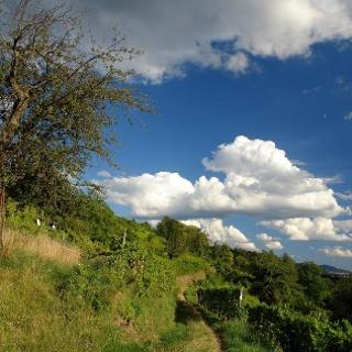 Weinberge über Laudenbach