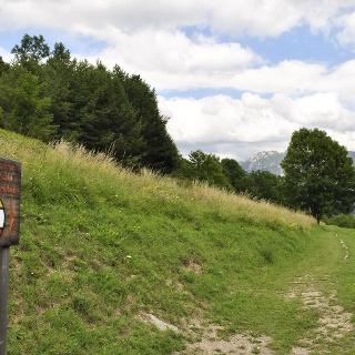 The pine walk
