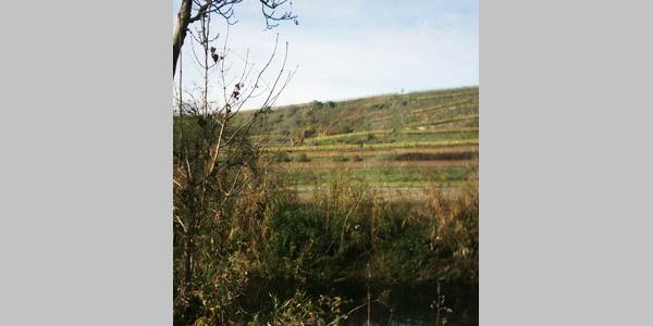 Der Blick über die Murr auf die Weinberge.