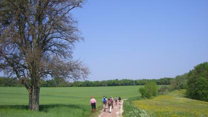 Wanderer auf dem Saargau