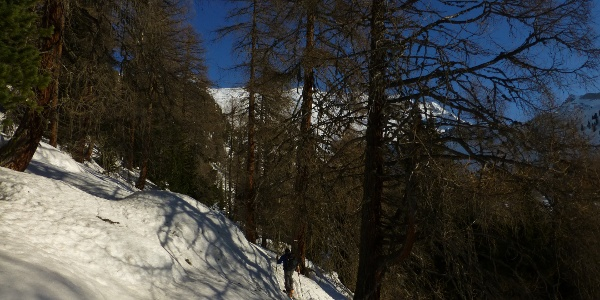 Mit der Querung zur Pirstlingalm, verlassen wir den Wald und gelangen in freies Schigelände.