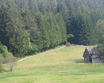 Dichter Wald und offene Wiesenfächen wechseln sich auf unserer Tour ab.