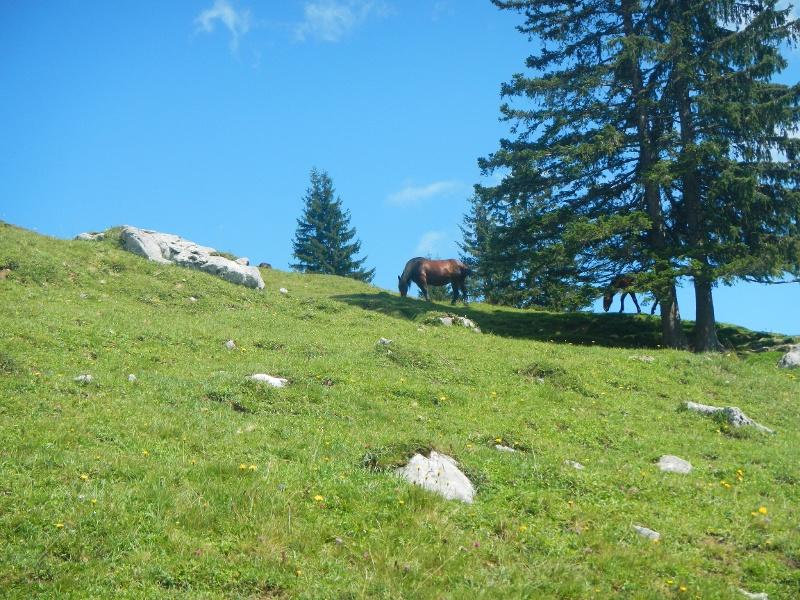 Almweide mit grasendem Pferd