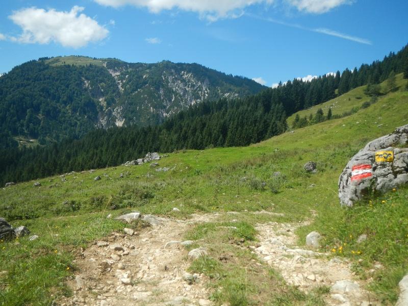 Wanderweg über Almweide mit SalzAlpenTour Wegkennzeichen