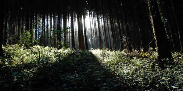Aachener Wald