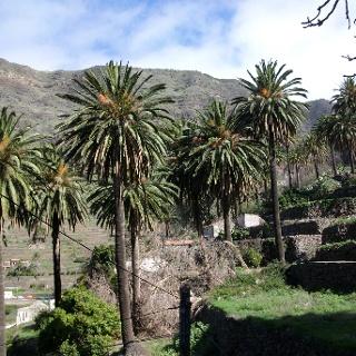 das Tal der Palmen Valle