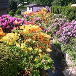 Blütenpracht in Kuhschnappel im Frühling