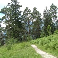Wunderbarer Kiefernwald.