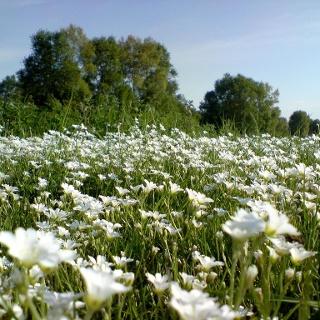 Wildwachsende Blumen begegnen uns auf unserem Weg.