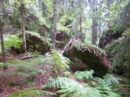 Foto Waldlandschaft am Nadelöhr-Aufstieg