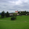 Mitten im Dorf mit Blick auf die Kirche St. Peter und Paul asen Hirsche und Rehe in Krailing.