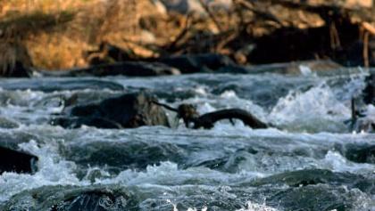 Entlang der Sieg erleben wir eine wunderschöne Flusslandschaft.