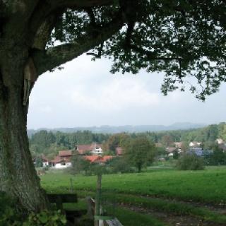 Unter diesem stattlichen Baum können wir auf den Bänken rasten.