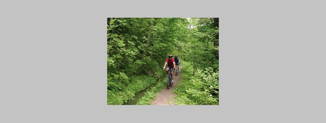 Auf kleinen Pfaden geht es durch den Wald bei Schömberg.