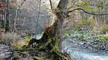 Bei unserer Wanderung von Hohegeiß zum Ebersberg folgen wir dem Verlauf des Großen Wolfsbachs.