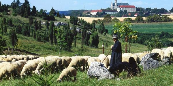 Blick vom Naturschutzgebiet Zwing bei Neresheim zur Abtei Neresheim