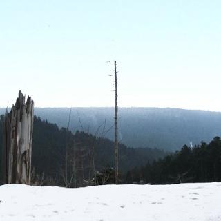 Der Blick über den Wald hinab ins Nagoldtal (Norden).