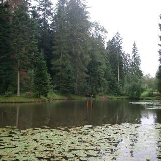 Der Doniswaldweiher liegt versteckt im Wald.