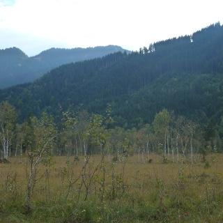 Immer wieder bieten sich Einblicke in die schönen Moose zwischen Maishofen und Lahntal.