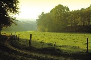 Der Waldsaumweg