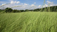 """""""Erlebnistour Bioenergie in Sachsen"""" Rundwanderung Unterwegs zur Bioenergie in und um Clausnitz"""