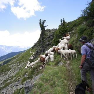 Schafsinn-Rundweg - Schäfer mit Herde