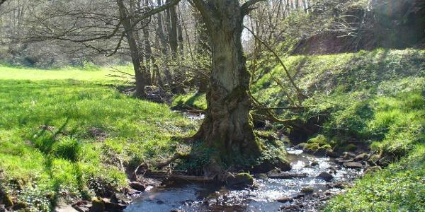 Bachlauf im Großbundenbachertal
