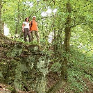 Wir wandern durch einen idyllischen Wald.