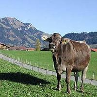 Wir fahren durch eine landwirtschaftlich geprägte Region.