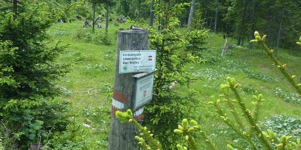 Hier zweigt der Steig von der Forststraße ab