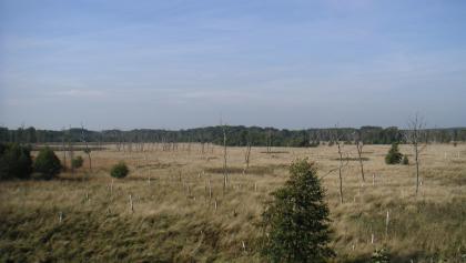 Der Blick von den Aussichtstürmen zeigt uns die Weite der Moorlandschaft.