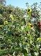 Farbtupfer in der Obstplantage. / Quelle: