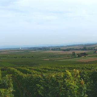 Blick über die Rheinebene und Rheinhessen