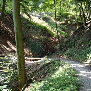 Durch den Nationalpark Eifel geht es von Einruhr nach Gemünd.