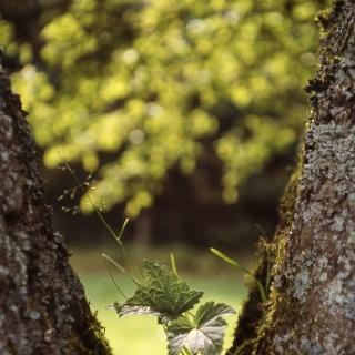 Auf unserem Weg können wir auch die Kunst der Natur entdecken.