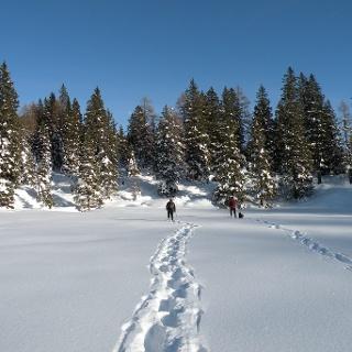 Passeggiata con le ciaspole al facile Monte Luchet nel Gruppo delle Maddalene