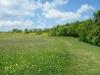 Frühling im Naturschutzgebiet