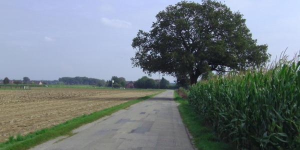 Wittenhorster Weg